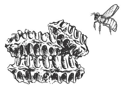 Illustrated Sustainable Process Honey Comb with Bee