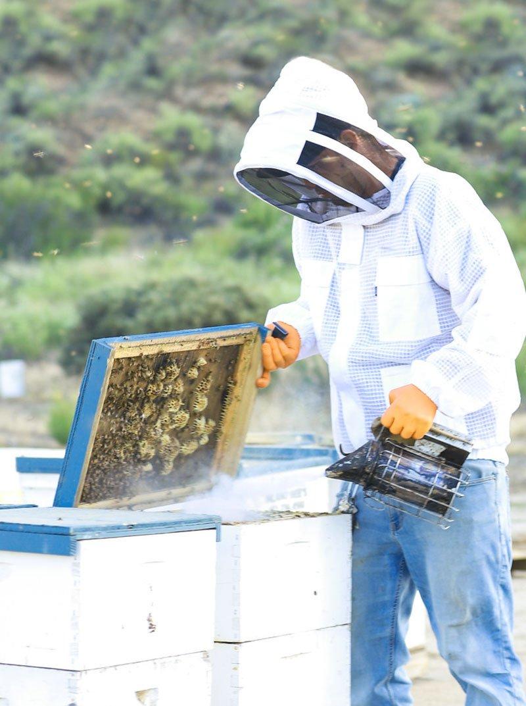 Sustainable Process Beekeeper Smoke