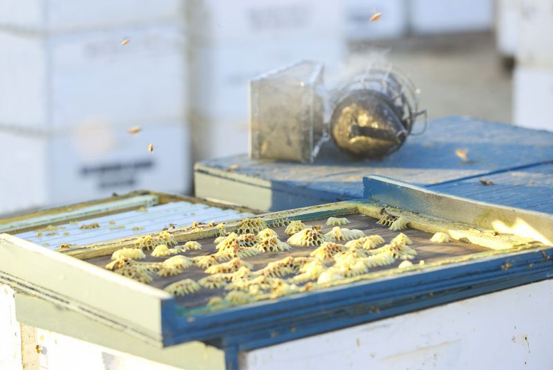 Sustainable Process Honey Comb and Smoker